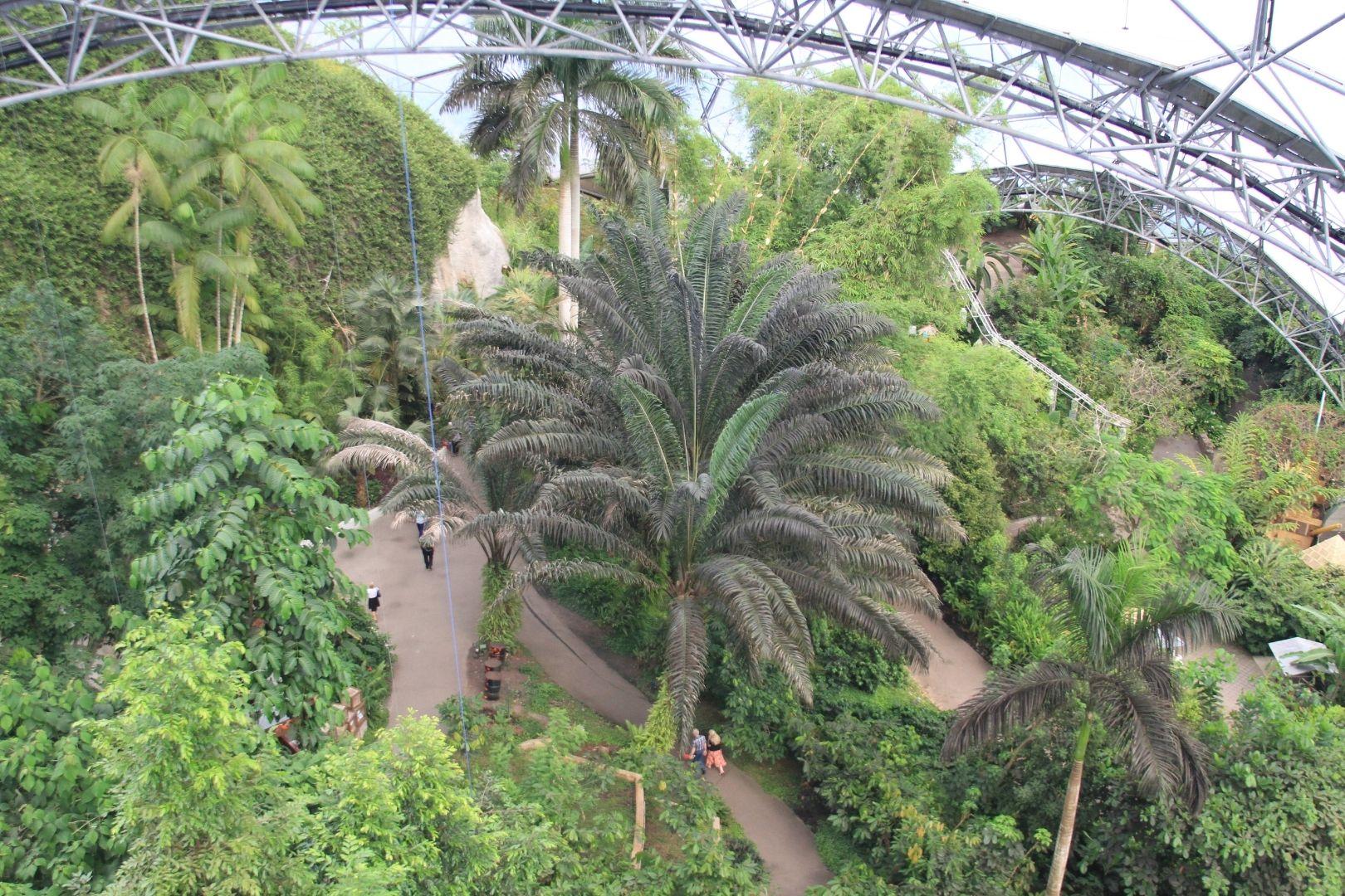Visite de Eden Project (5)