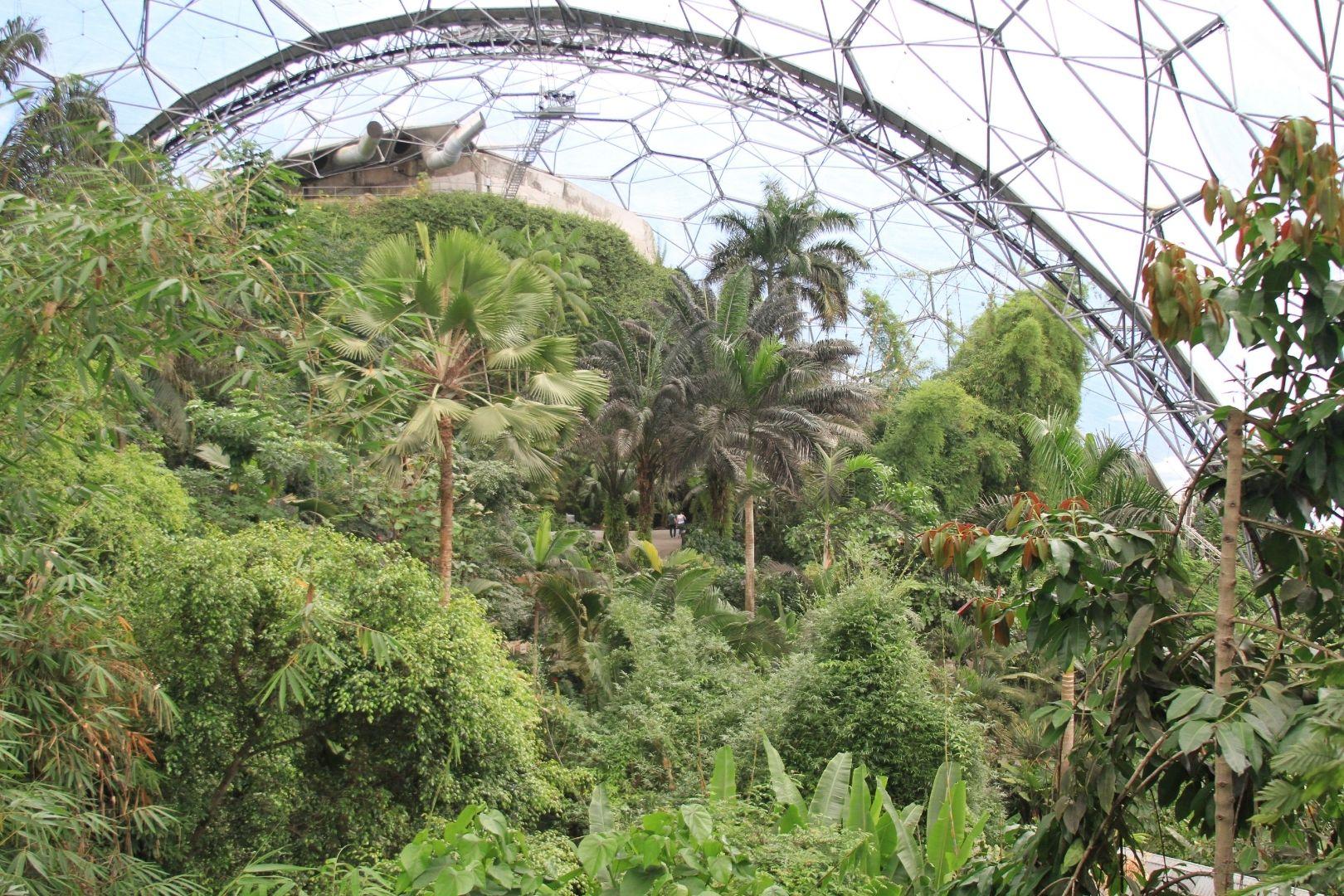 Visite de Eden Project (6)